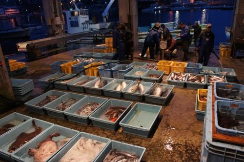 真鶴魚市場